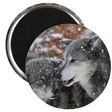 ms shn wolf Magnet