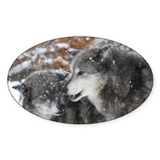 xW shn wolf Decal