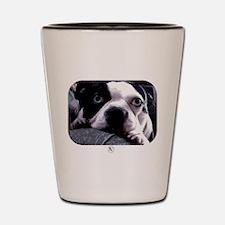 Sad Boston Terrier Shot Glass