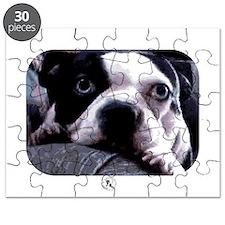 Sad Boston Terrier Puzzle