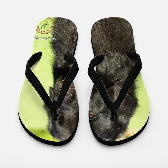 Newfoundland 9M099D-018 Flip Flops