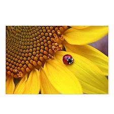 Mousepad Ladybug Postcards (Package of 8)