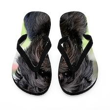 Affenpinscher 9Y516D-049 Flip Flops