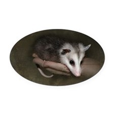 Possum child Oval Car Magnet
