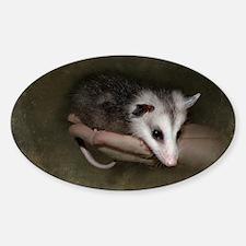 Possum child Sticker (Oval)