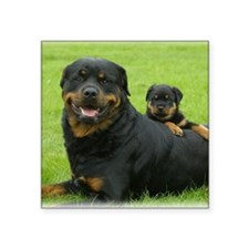 "Rottweiler 9W025D-081 Square Sticker 3"" x 3"""