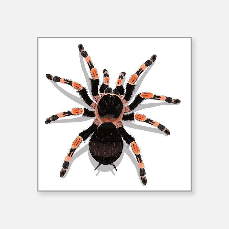"tarantula_CP Square Sticker 3"" x 3"""