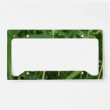 dandelion License Plate Holder