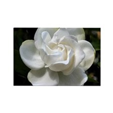 gardenia 16x20 Rectangle Magnet
