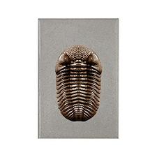 trilobiteSQ3OVE Rectangle Magnet