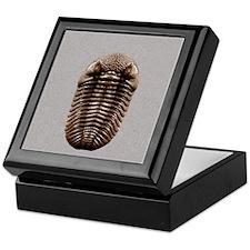 trilobiteSQ3OVE Keepsake Box