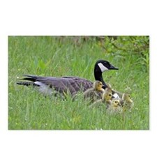Goslings With Mom Postcards (Package Of 8)