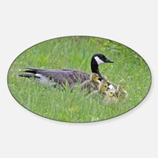 Goslings with mom Decal