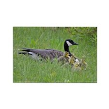 Goslings With Mom Rectangle Magnet