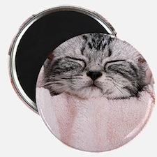 kitty basket photo kc Magnet