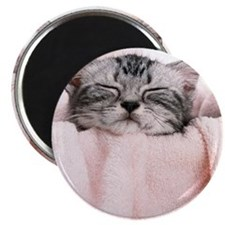 kitty basket slider Magnet