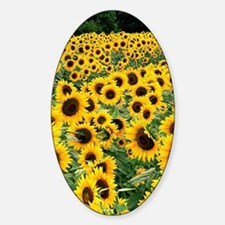 Sunflowers Decal
