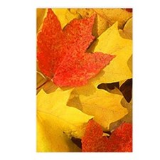 Autumn_leaves_iPhone Postcards (Package of 8)