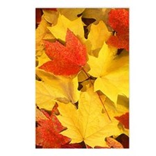 Autumn_leaves Postcards (Package of 8)