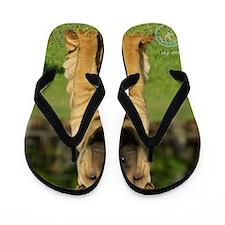 Shar Pei 9M100D-049 Flip Flops