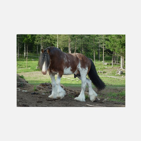 coverCLYDESDALE Rectangle Magnet