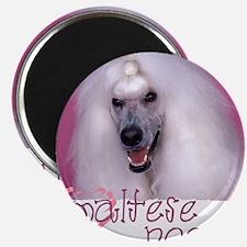 Poodle cup shirt Magnet