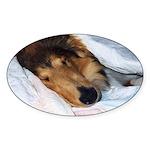 Blanket Collie Oval Sticker