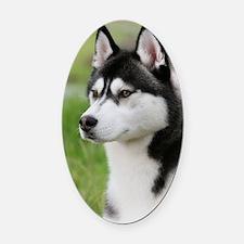 Siberian Husky 9Y570D-006 Oval Car Magnet