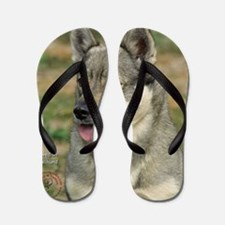 Swedish Vallhund 9J100D-11 Flip Flops
