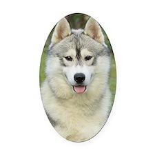 Siberian Husky 9L69D-14 Oval Car Magnet