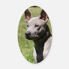 Thai Ridgeback 9Y815D-302 Oval Car Magnet
