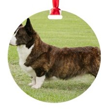 Welsh Corgi Cardigan 9Y501D-091 Ornament