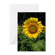100_7759 Greeting Card
