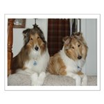 Rescued Collie buds Small Poster
