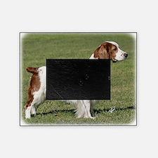 Welsh Springer Spaniel 9Y394D-041 Picture Frame