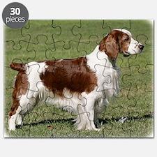 Welsh Springer Spaniel 9Y394D-041 Puzzle
