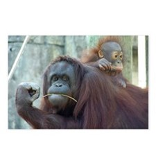 Orangutan Postcards (Package of 8)
