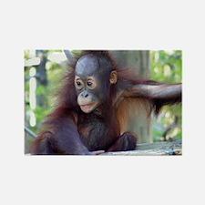 Orangutan Rectangle Magnet