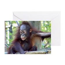 Orangutan Greeting Cards (Pk of 10)
