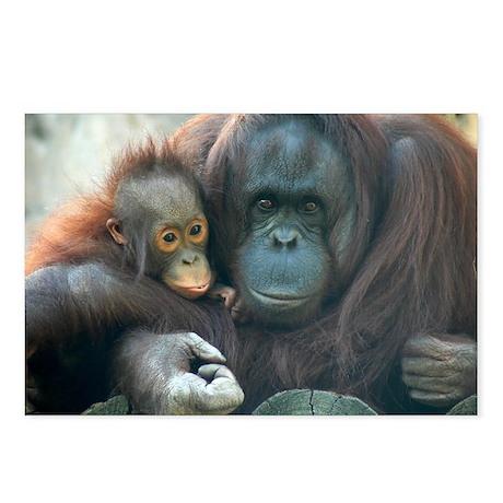 Orangutan Postcards (Package of 8)