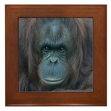 Orangutan Framed Tile