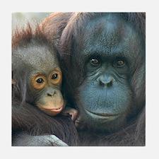 Orangutan Tile Coaster