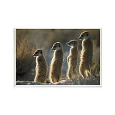"""""""Meerkats #1"""" Rectangle Magnet"""