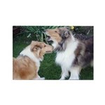 New Collie Buds Rectangle Magnet (10 pack)