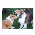 New Collie buds Postcards (Package of 8)