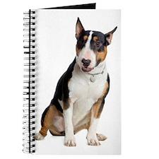 bull-terrier Journal
