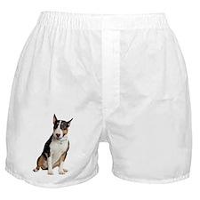 bull-terrier Boxer Shorts