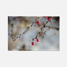 Winter Berries Rectangle Magnet