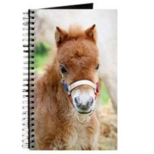 Orphaned Foal - Joy Journal