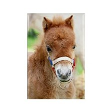 Orphaned Foal - Joy Rectangle Magnet